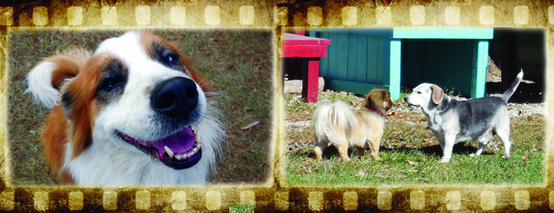 Film Strip of Dogs